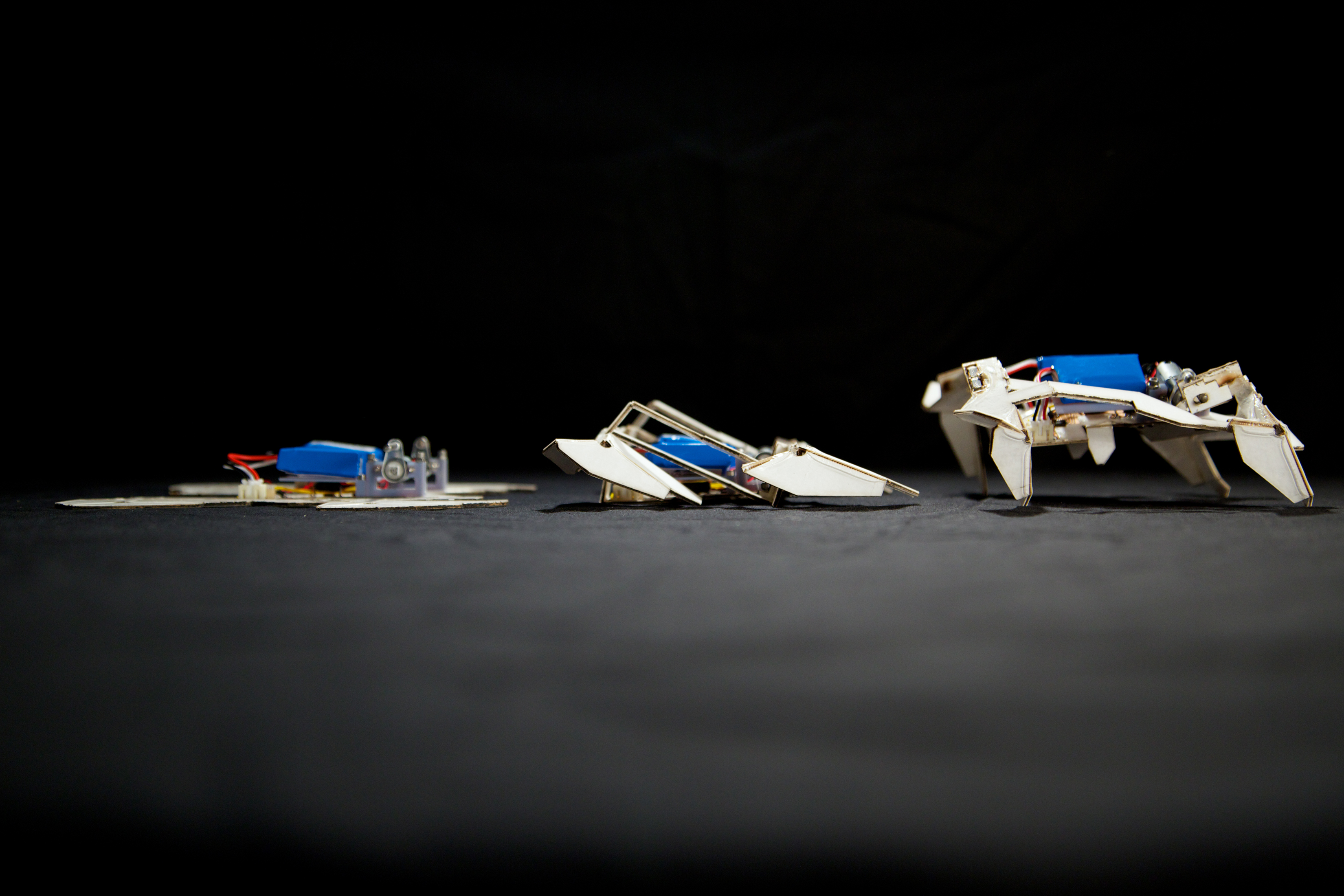 An origami robot transforming from flat to 3D. Photo courtesy of Seth Kroll, Wyss Institute.