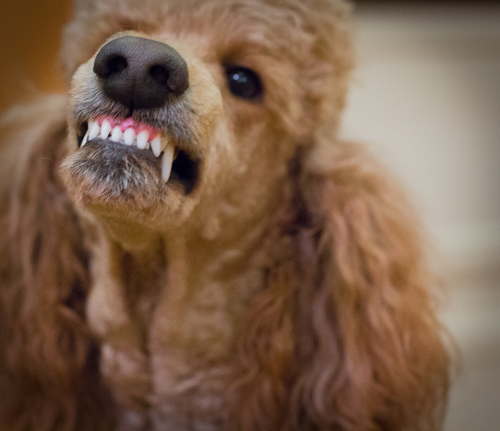 New Docker release helps users avoid the Poodle bug