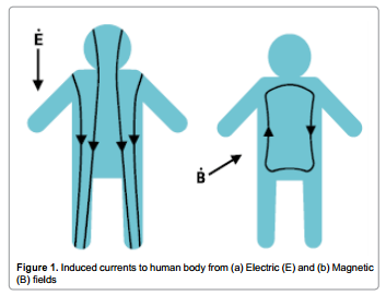 EMF in our bodies