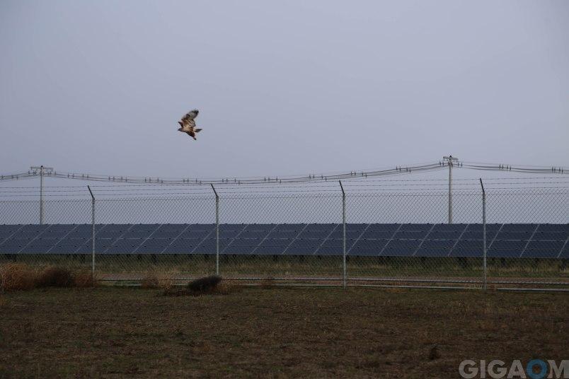 A bird takes off over the Topaz solar farm.